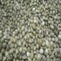 Boilieman-Hennepzaad--5-kg