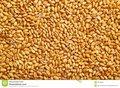Boilieman-tarwe-5-kg